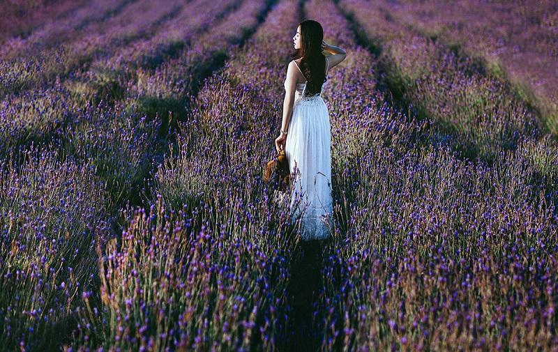 vuon-hoa-lavender-da-lat-4