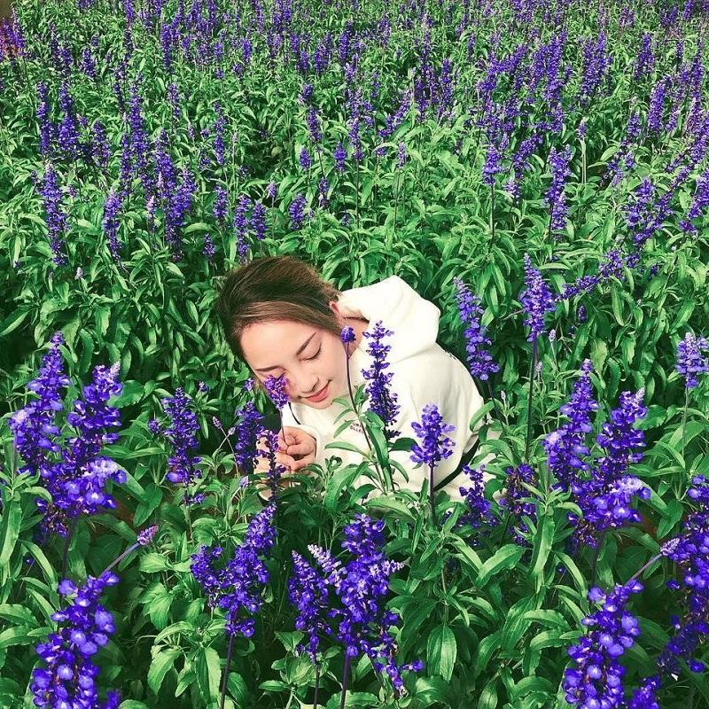 vuon-hoa-lavender-da-lat-6
