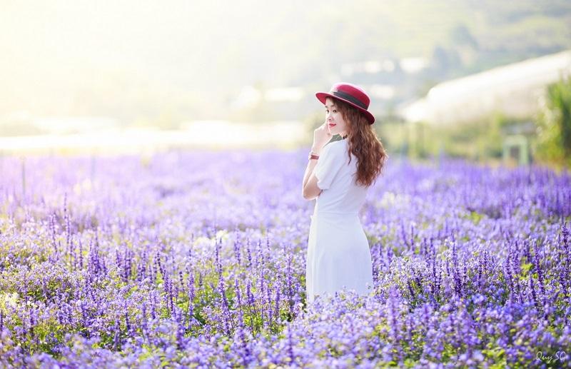 vuon-hoa-lavender-da-lat-5