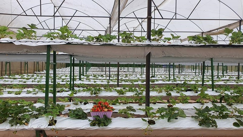 homestay-da-lat-co-vuon-farm-12