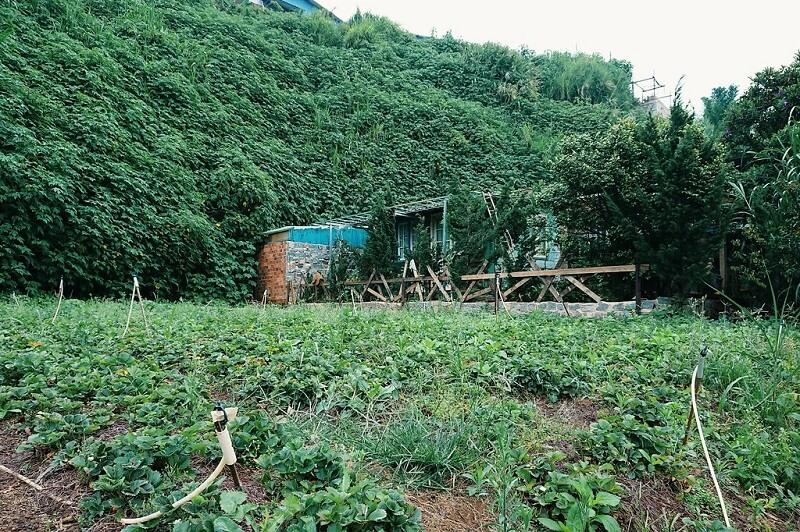 homestay-da-lat-co-vuon-farm-4